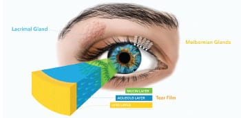 Meibomian glands produce the lipid layer of tear film